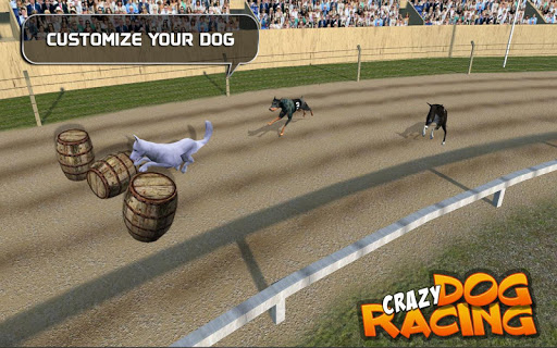 Crazy Dog Racing